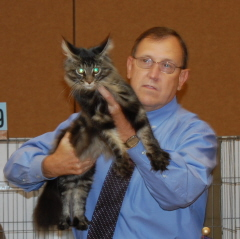 Atticus at the cat show in Reno 4th of July weekend
