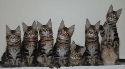 Windwalker kittens 2014