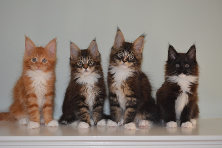 Momentum's ten week old kittens