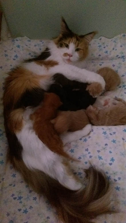 Momentum and her seven kittens 2016