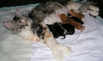 Katie and 8 newborn kittens June1, 2007